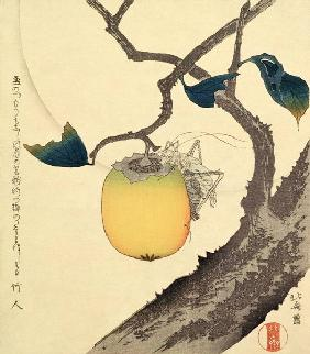 Moon, Persimmon and Grasshopper, 1807 (colour woodcut)