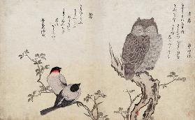 An Owl and two Eastern Bullfinches, from an album 'Birds compared in Humorous Songs, Contest of Poet 19th