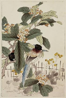 Blue tailed birds among the blossom from Bunrei Kacho Gafu 1885
