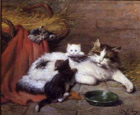 Cat with kittens 1924
