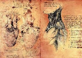 Anatomical drawing of hearts and blood vessels from Quaderni di Anatomia vol 2; folio 3v