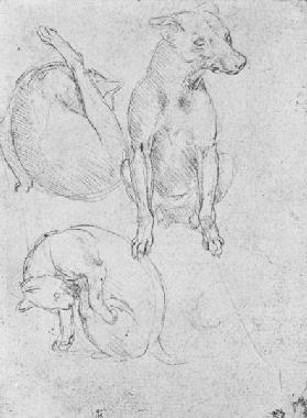 Study of a dog and a cat, c.1480 (metalpoint on paper)