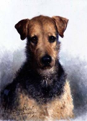 Wire Fox Terrier 1933