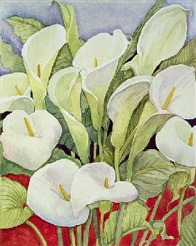 Arum Lillies, 1978 (watercolour)