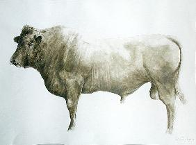 Islay Bull, 2004 (acrylic on canvas)
