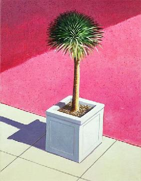 Small palm, 1995 (acrylic on canvas)