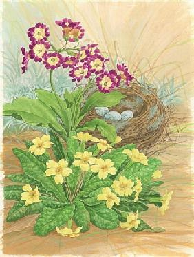 Auricula, Primrose and Nest, 1998 (w/c on paper)