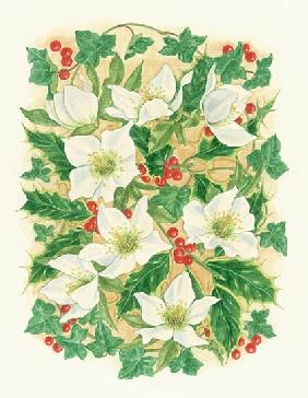 Christmas Roses, 1997 (w/c on paper)