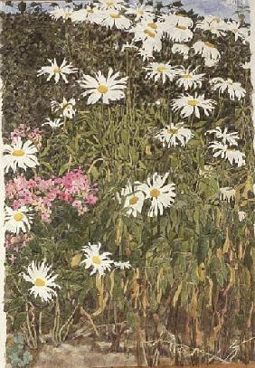 Daisies and Phlox (w/c on paper)