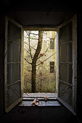 Autumn in asylum
