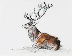 Seated Stag