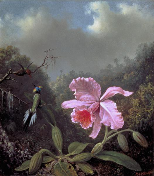 Still Life with an Orchid and a Pair of Hummingbirds c.1890s