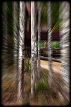 Blurred forest 1