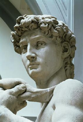 Michelangelo (Buonarroti) - David, detail of the head by Michelangelo Buonarroti (1475-1564)
