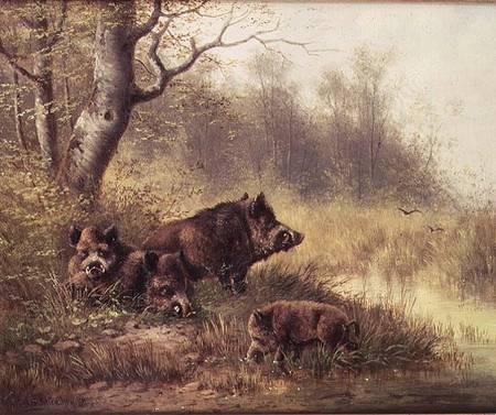 black wild boar wallpaper