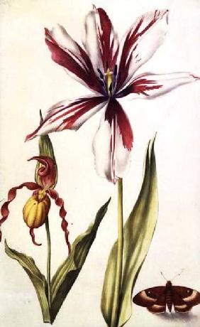 Orchid, Tulip and Butterfly c.1675