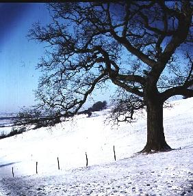 Winter landscape, Hockley Downs, Essex