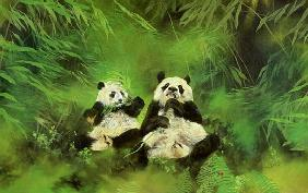 Pandas, 1998 (acrylic and pencil on canvas)