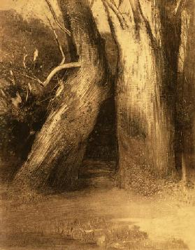 Two Trees c.1875