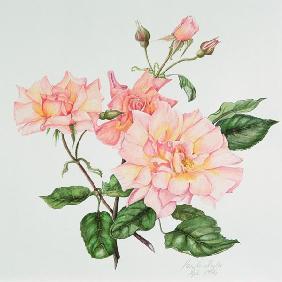 Kunstdruck von  Thisisnotme  - Rosa Compassion, 1996 (w/c on paper)