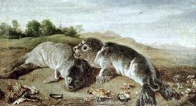 Two Young Seals on the Shore c.1650