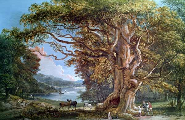 An Ancient Beech Tree 1794