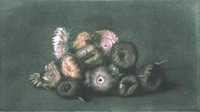 Still Life of Dried Flowers (coloured mezzotint)