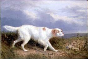 A Setter on the Moor