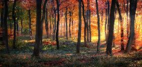 Autumn Woodland Sunrise