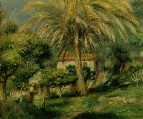 Palm Trees 1902