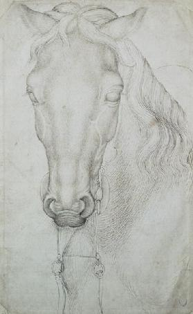 Head of a Horse (pen & ink on paper)