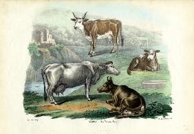 Cattle 1863-79