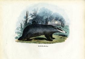 European Badger 1863-79