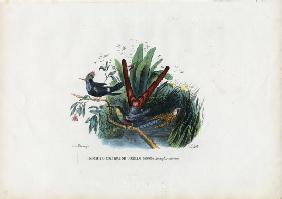 Hummingbirds 1863-79