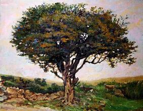 The Tree, Anglesey