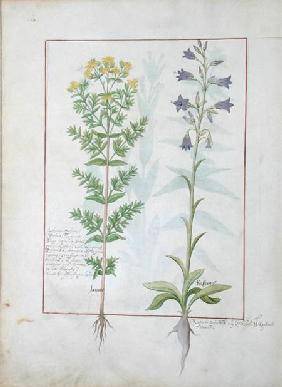 Two flowering plants from 'The Book of Simple Medicines' by Mattheaus Platearius (d.c.1161) c.1470