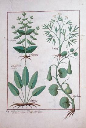 Ms Fr. Fv VI #1 fol.122r Euphorbia Lathyris, Beechwort, Mint and Fig c.1470