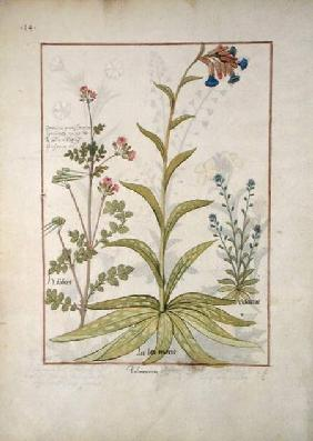 Ms Fr. Fv VI #1 fol.138v Lungwort and Geranium c.1470