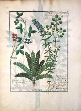 Ms Fr. Fv VI #1 fol.158v Ferns, Brambles and Flowers c.1470