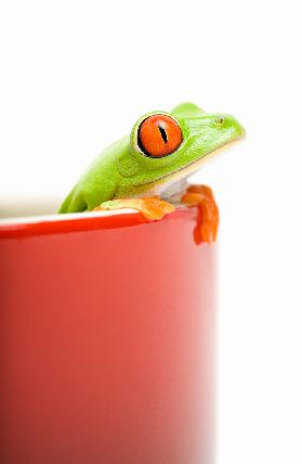 frog looking out of cooking pot