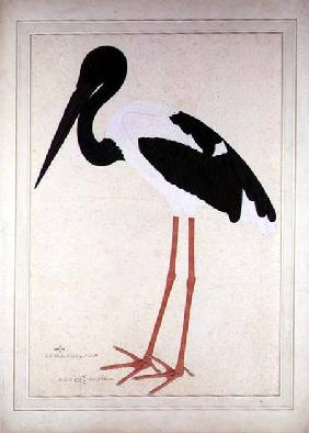 Blacknecked Stork, Xenorhynchus Asiaticus, painted for Lady Impey at Calcutta 1781