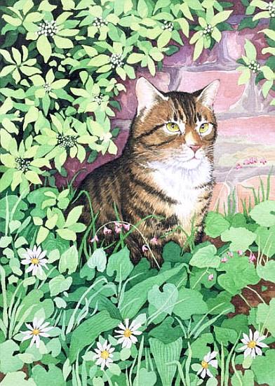 Jackie 39 39 s cat garden design suzanne bailey als for Garden designs by jacqueline