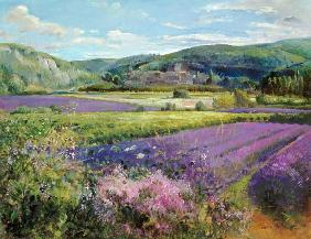 Lavender Fields in Old Provence (oil on canvas)