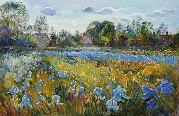 Iris Field in the Evening Light, 1993