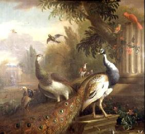 Peacock and Peahen with a Red Cardinal in a Classical Landscape