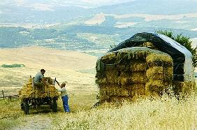Haymaking at Volterra, Tuscany, Italy, 1999 (photo)