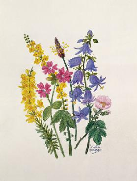 Bluebells, Broom, Herb Robert and other wild flowers (w/c on paper)