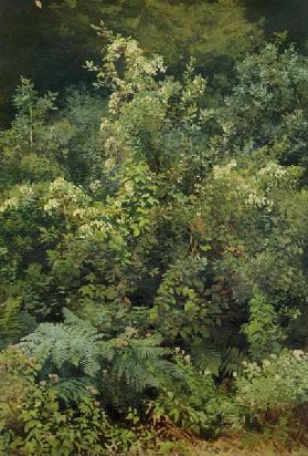 Hops and Ferns in Woodland 1870  pape
