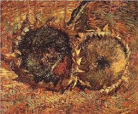 Two Cut Sunflowers 1887