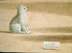 Vision of St. Augustine, detail of the dog 1502-08